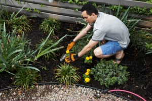 Credit Gardening and Improving Credit Score